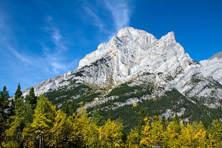 Mount Kidd met zijn vouw in Kananaskis Country in Canada