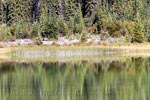 De weerspiegeling van de bomen in Dog Lake in Kootenay NP