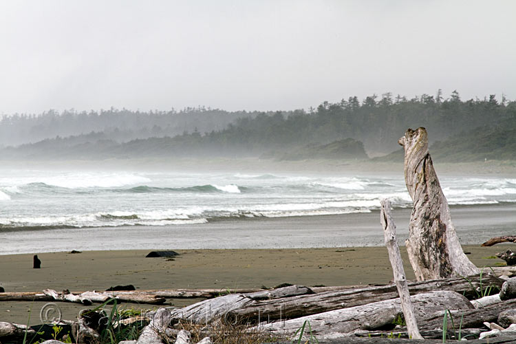 Bomen, zee, regenwoud en storm in Pacific Rim National Park in Canada