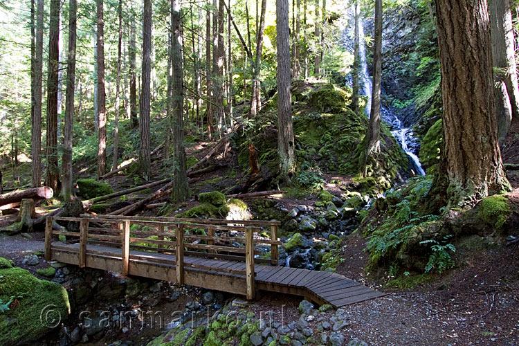 Strathcona Dog Park Vancouver