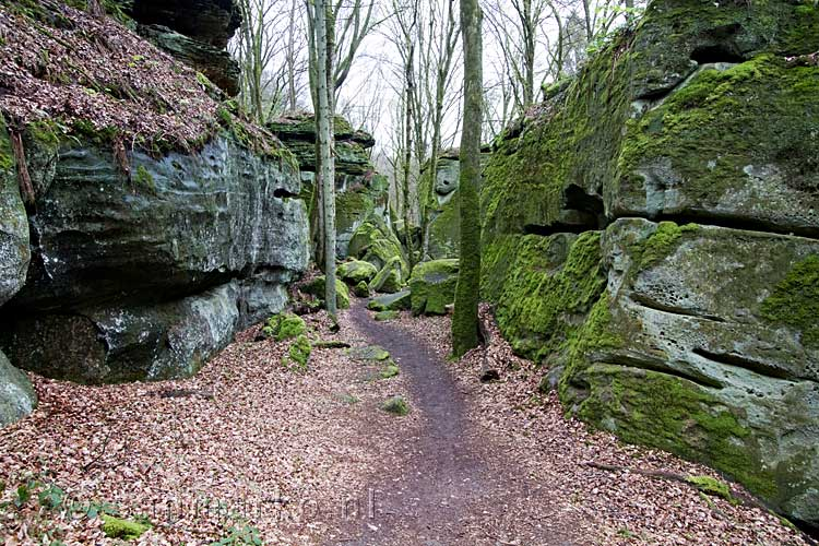 wandelen door het labyrinthe bij echternach bij de aeschbach in luxemburg - berdorf