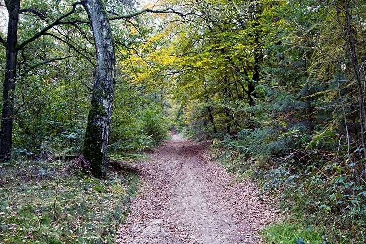 wandelen montferland