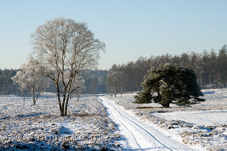 De Loenermark in de winter