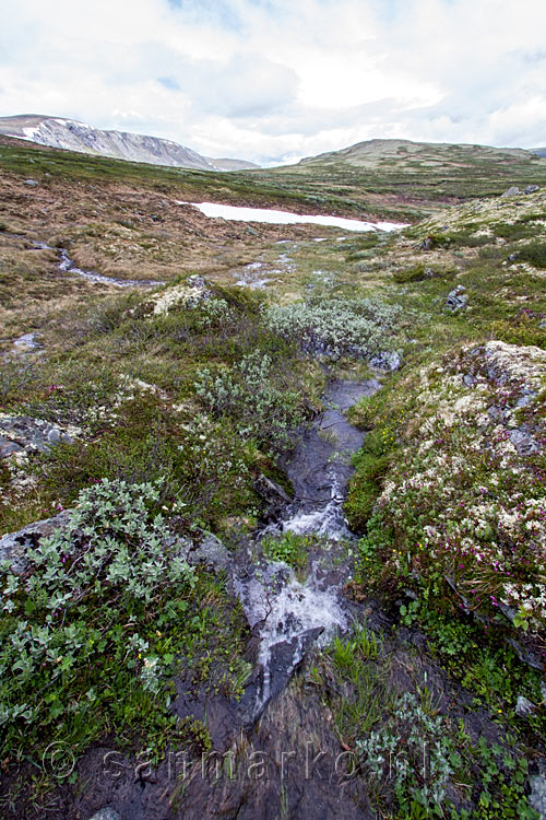 Smeltwater stromend over het wandelpad over de Kongsvoll in Dovrefjell