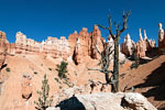 Hoodoo's langs Peekaboo Loop in Bryce Canyon
