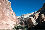 De kloof van Capitol Gorge in Capitol Reef in Utah in de USA